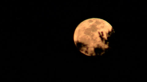 An orange moon rises behind trees in a forest Stock Video Footage