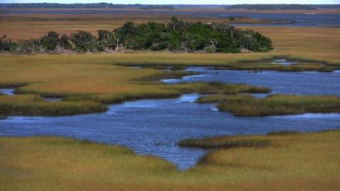 A salt marsh near St. Augustine, Florida Footage