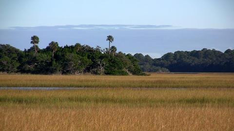 A salt marsh near St. Augustine, Florida Stock Video Footage