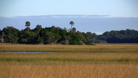 A salt marsh near St. Augustine, Florida Stock Video Footage