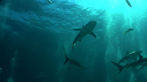 Good footage of a shark swimming underwater, from Stock Video Footage