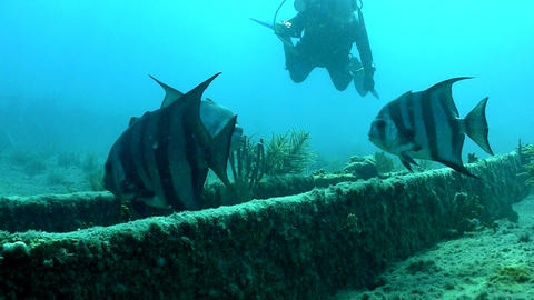 Fish and divers swim around a shipwreck Footage