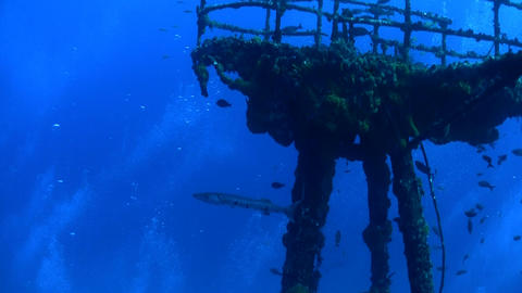 Barracuda swim around a wreck underwater Stock Video Footage