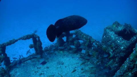 Fish swim around a shipwreck Stock Video Footage