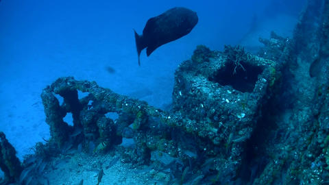 Fish swim around a shipwreck Stock Video Footage
