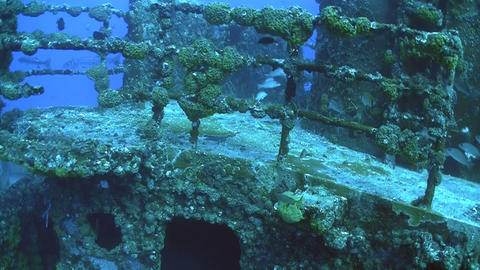Fish swim around and colonize a shipwreck Stock Video Footage