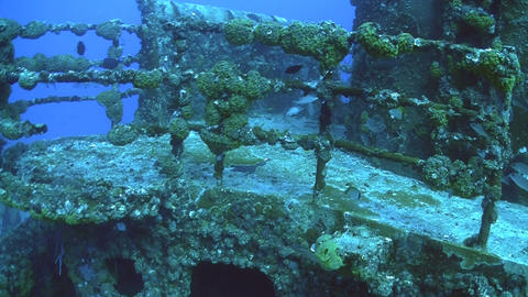Fish swim around and colonize a shipwreck Stock Video Footage