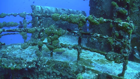 Fish swim around and colonize a shipwreck Footage