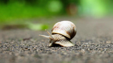Snail on green foliage background Footage