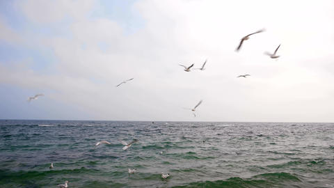 Gulls Are Flying Above Black Sea 4K Live Action