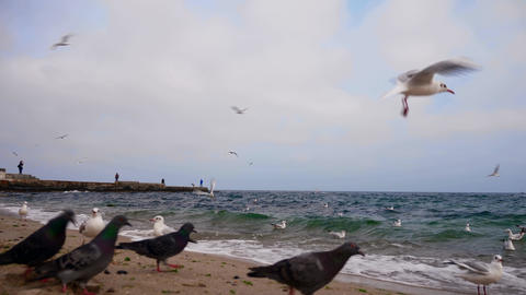 Gulls Are Flying Above Black Sea4K Live Action
