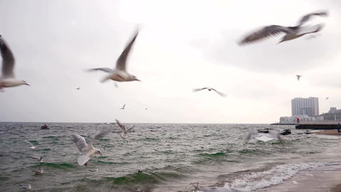 Gulls Are Flying Above Black Sea 4 Live Action