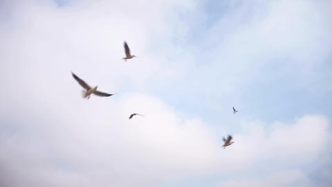 Gulls Are Flying In The Sky White Clouds 2 Live Action