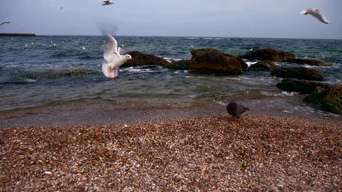 Gulls And Doves On The Sea Shore Cloudy Sky, Waves, Beach 6 Live Action