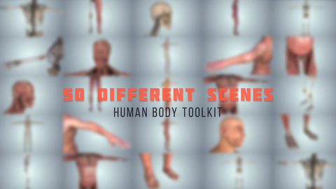 Human Body Toolkit After Effects Template