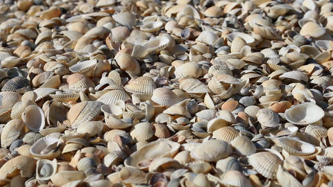 shell beach on the sea Live Action