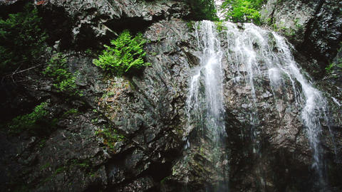 Waterfall in the middle of the Forest Live Action