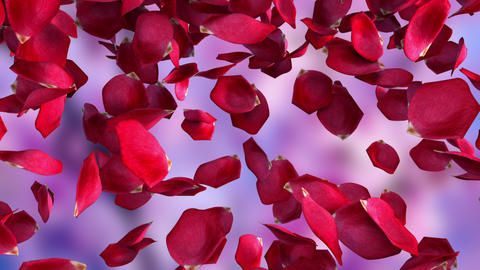 Rose petals falling from top to bottom, computer generated. Rain of petals. 3d Live Action