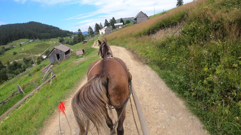 Horse pulls a chaise on a dirt path on a sunny day Live Action