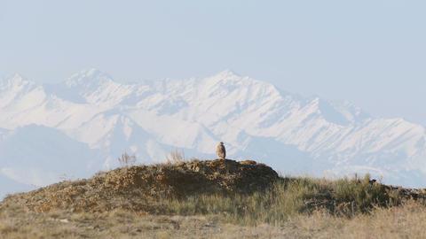 Eagle Snow Mountains Kazakhstan 4K Footage
