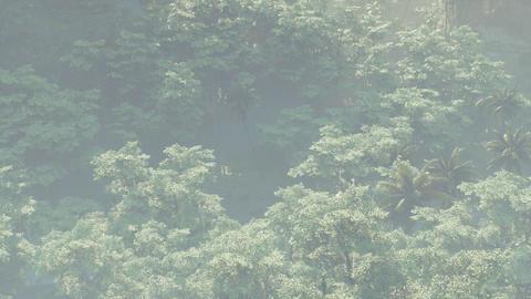 Fog covered jungle rainforest landscape Live Action