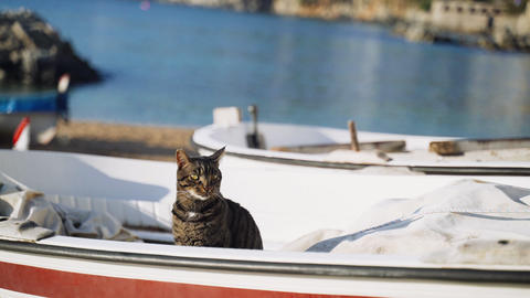 Cat on the boat. Funny tiger green-eyed cat sitting on a fishing boat and looks Live Action