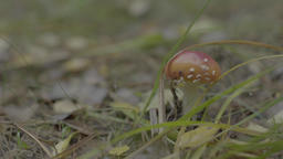 Mushroom in the forest Live Action