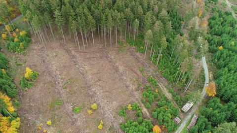 Deforestation, dead trees and forest dieback - aerial view Live Action