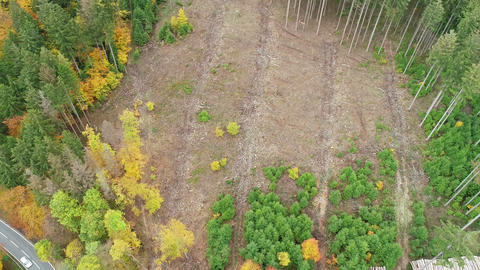 Deforestation, dead trees and forest dieback Live Action