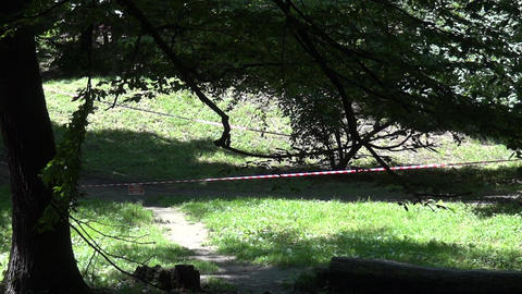 Competition cyclists in a forest on a trail bordered with plastic tape 78 Footage