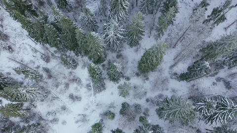 Flight over the winter snow-covered forest. Winter forest as background Live Action