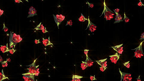 Tulip flower particle loop animation Animation