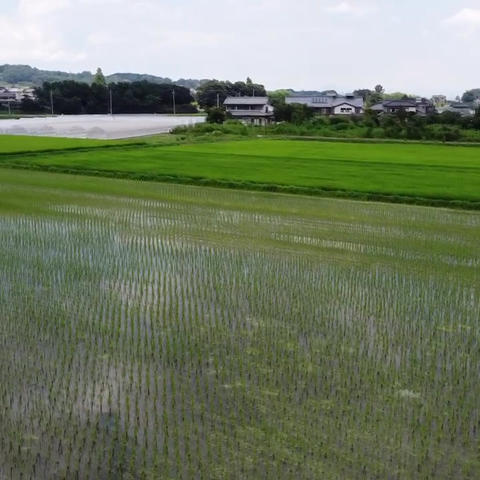 Japanese paddy field farm drone Live Action