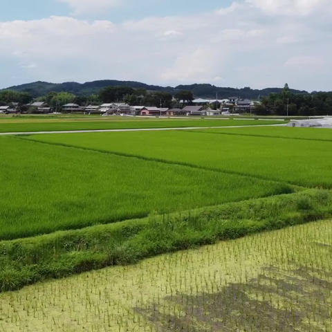 Japanese paddy field farm dorone Live Action