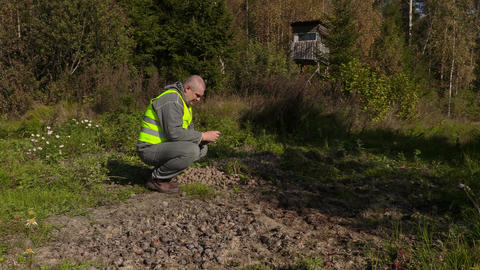 Ranger brings feed to wild boar Footage