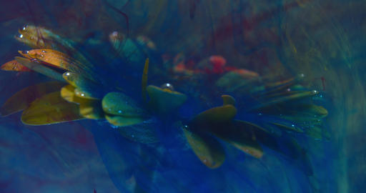 Colorful ink in big splashes is flowing on a flower underwater, art, 4k Live Action