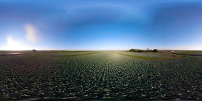 Cabbage growing on a field 360VR VR 360° Video