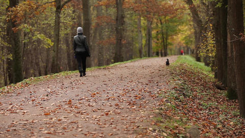 woman and dog walk in park in autumn Footage