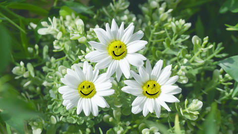 Happy positive flowers smiling at the camera in 4K Slow motion 60fps Live Action