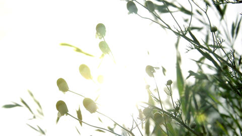Plants And Flowers Receiving Sun Footage