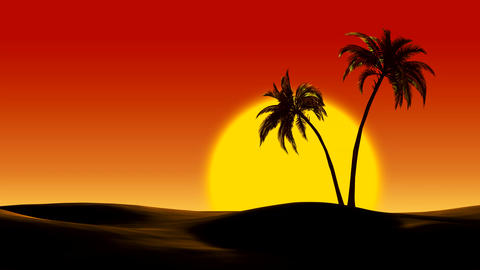 Sunrise over tropical palm trees in the desert Footage