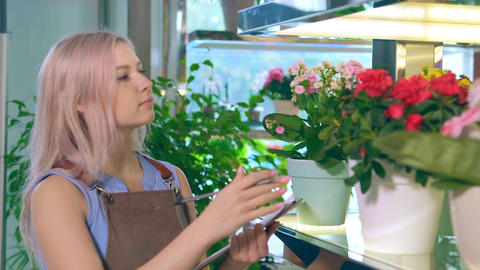 Flower shop assistant observes pots with blooming flora Live Action