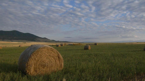 Bales of hay sit in green fields on a prairie farm Stock Video Footage