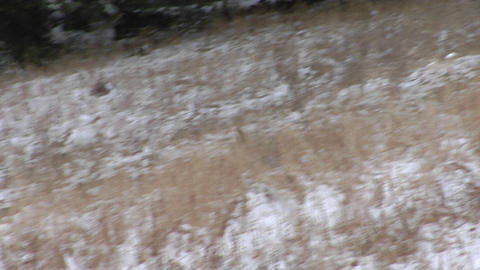 A coyote scampers across a snowy field in winter Stock Video Footage