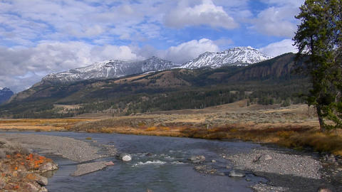 A small stream flows in Yellowstone National Park, Wyoming Footage
