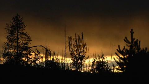 Trees both burned and unburned stand in silhouette after... Stock Video Footage