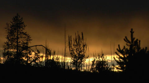 Trees both burned and unburned stand in silhouette after a forest fire Footage