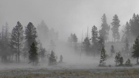 Fog drifts amongst trees at Yellowstone National Park Footage