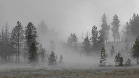 Fog drifts amongst trees at Yellowstone National Park Stock Video Footage