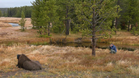 A man photographs a bison at Yellowstone National Park Stock Video Footage